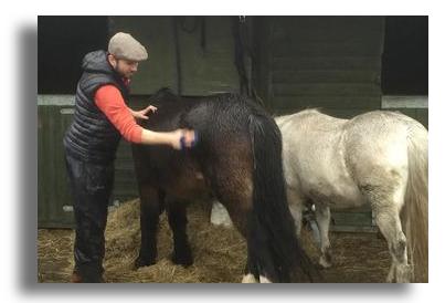 Horses at Brynawel Drug and Alcohol rehab